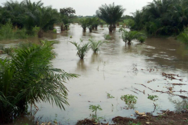 Flooded trees in Uganda